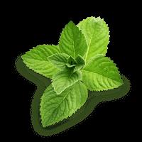 bgl-green